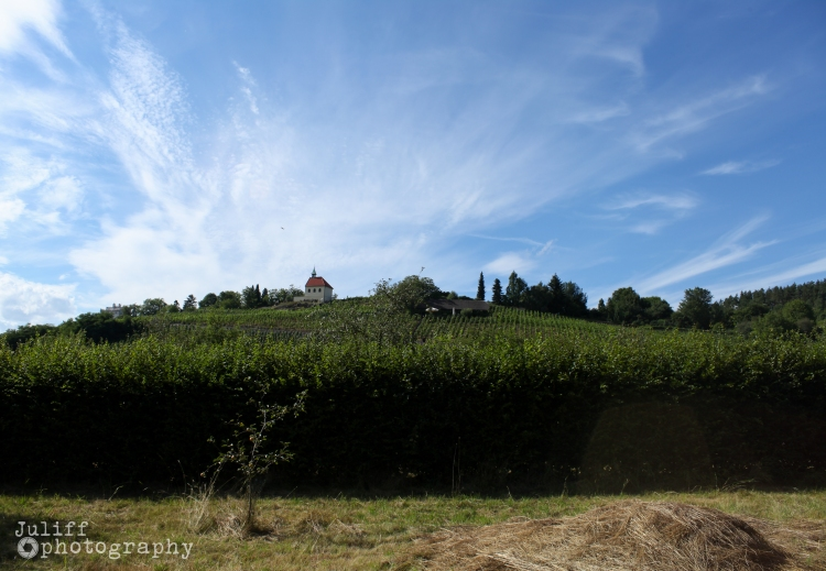 Vineyard On A Hill 2
