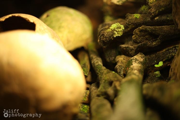 Bones with Moss
