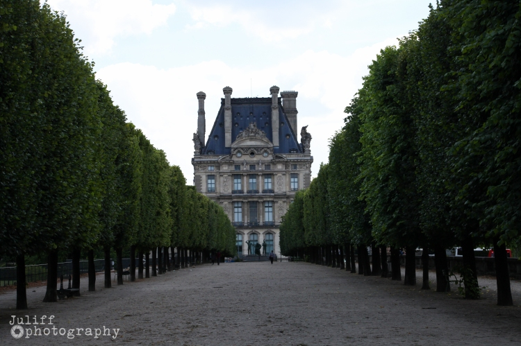 Rows of trees Paris